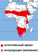 185 страус африканский.jpg