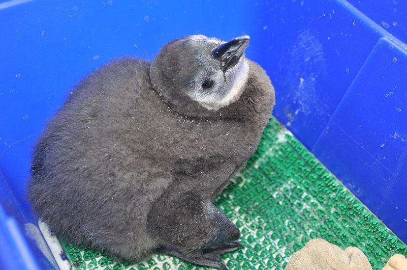 Пингвин3.jpg